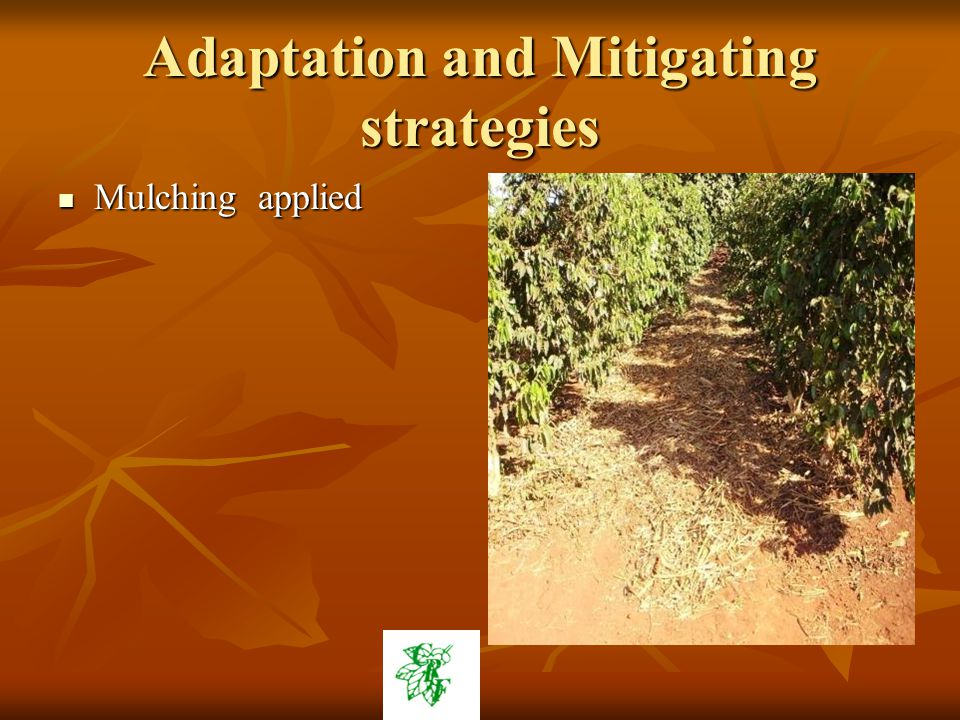 Adaptation and Mitigating strategies Mulching applied Mulching applied