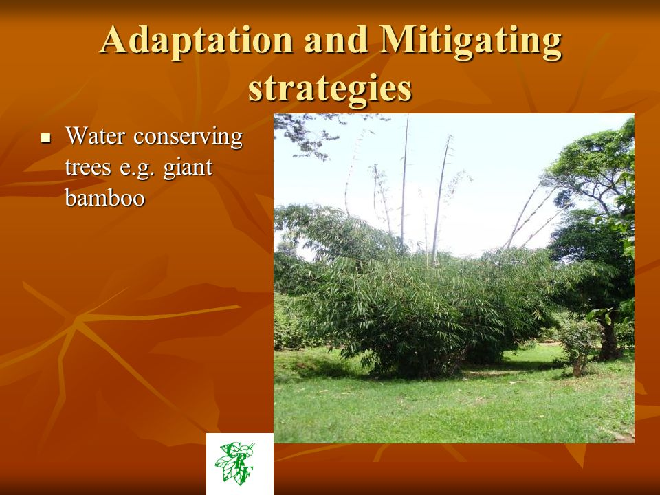 Adaptation and Mitigating strategies Water conserving trees e.g.