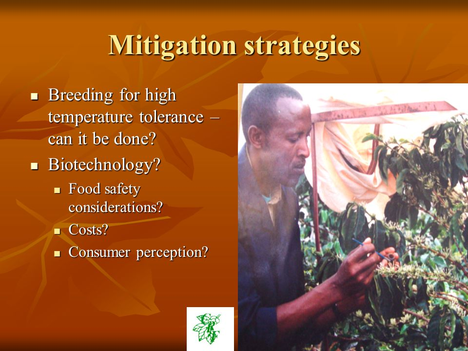 Mitigation strategies Breeding for high temperature tolerance – can it be done.