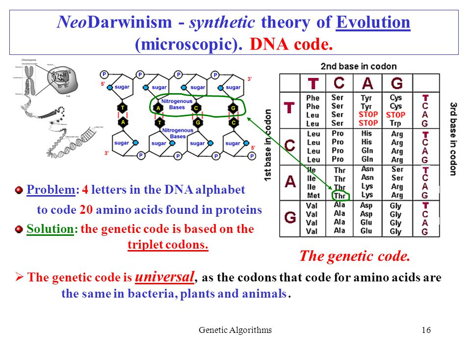 Genetic Algorithms16 NeoDarwinism - synthetic theory of Evolution (microscopic).