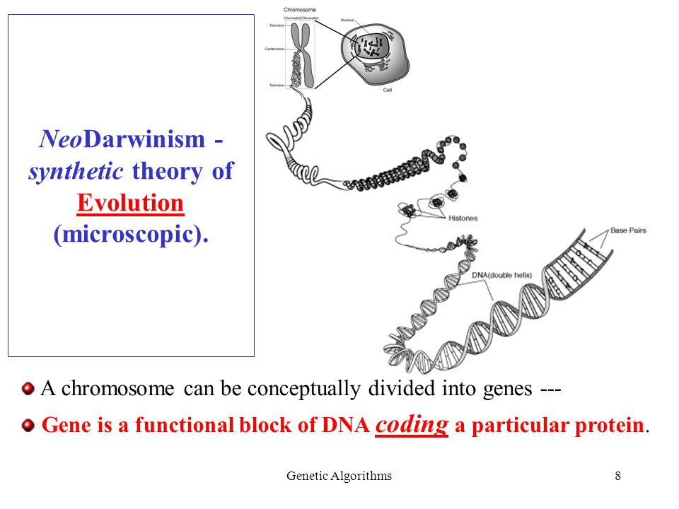Genetic Algorithms8 NeoDarwinism - synthetic theory of Evolution (microscopic).