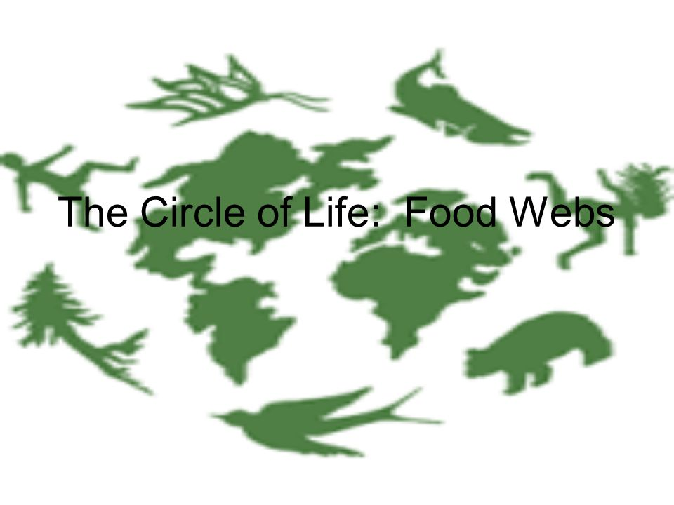 Food Chain: Nature's Electricity A food chain shows how each living thing gets its food.