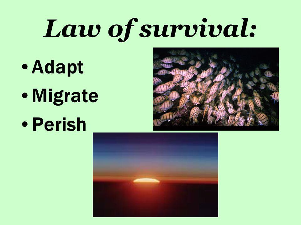 Law of survival: Adapt Migrate Perish