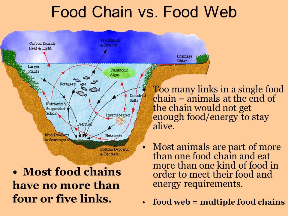 Food Chain vs.