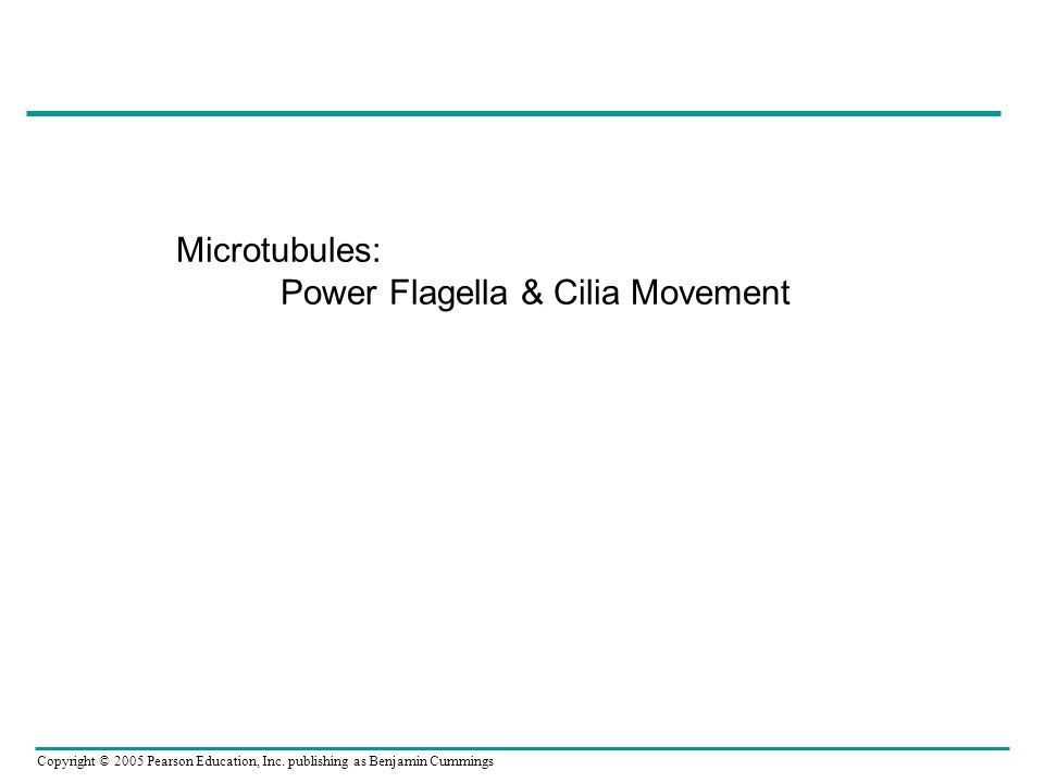 Copyright © 2005 Pearson Education, Inc. publishing as Benjamin Cummings Microtubules: Power Flagella & Cilia Movement