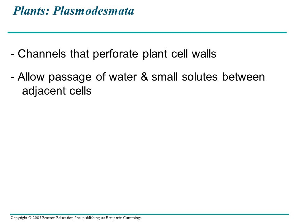 Copyright © 2005 Pearson Education, Inc. publishing as Benjamin Cummings Plants: Plasmodesmata - Channels that perforate plant cell walls - Allow pass