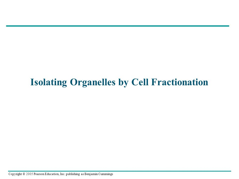 Copyright © 2005 Pearson Education, Inc. publishing as Benjamin Cummings Isolating Organelles by Cell Fractionation