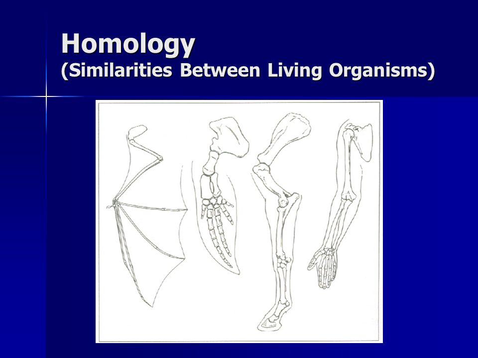 Homology (Similarities Between Living Organisms)