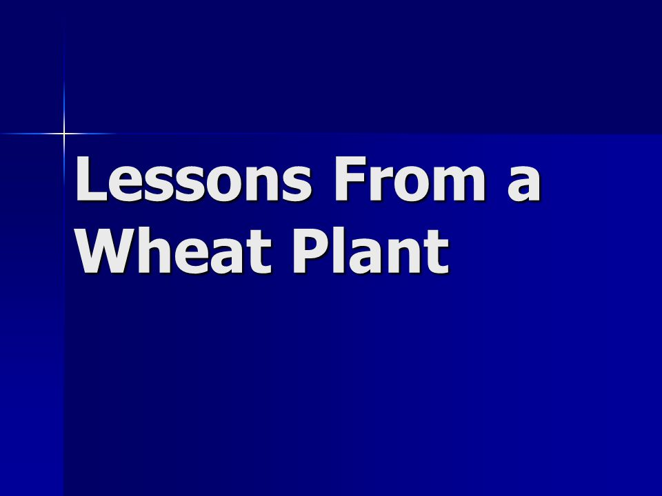 Lessons From a Wheat Plant