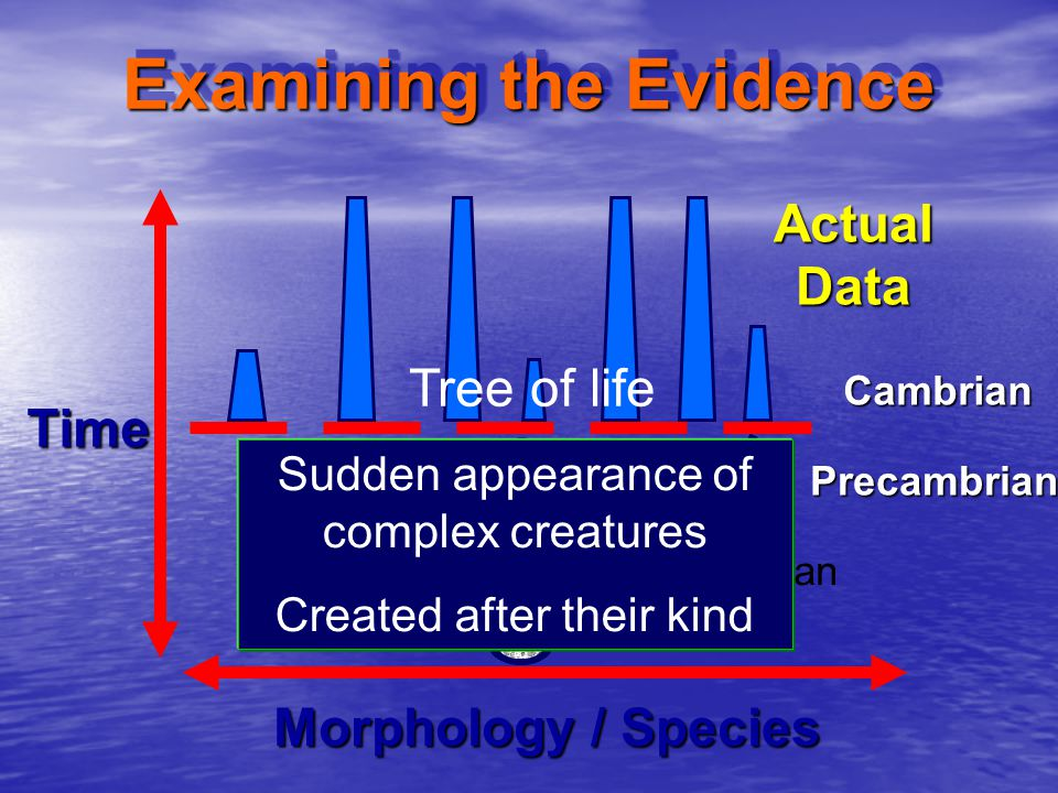Examining the Evidence Morphology / Species TimeCambrianPrecambrian Darwinian Model Actual Data Sudden appearance of complex creatures Created after their kind Tree of life