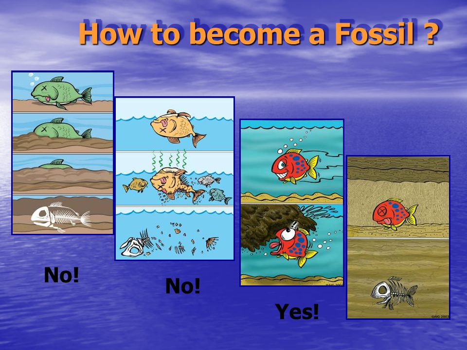 What do the fossils tell do the fossils tell us? us? God judges sin God provides salvation