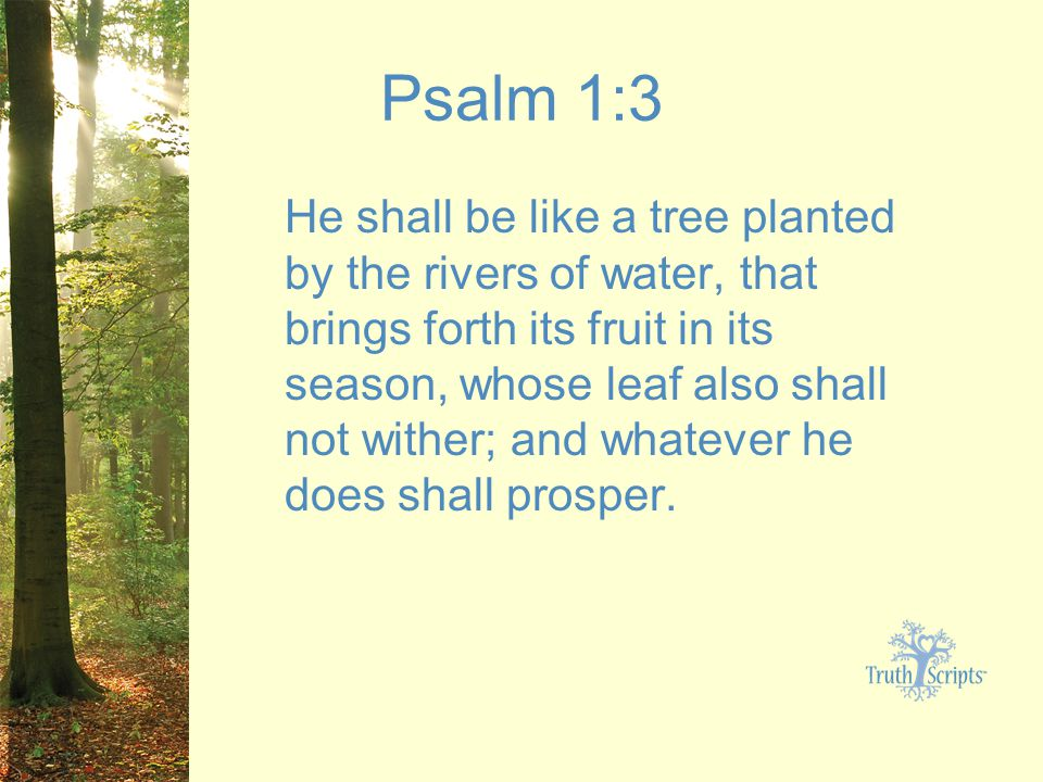 Psalm 1:3 He shall be like a tree planted by the rivers of water, that brings forth its fruit in its season, whose leaf also shall not wither; and whatever he does shall prosper.