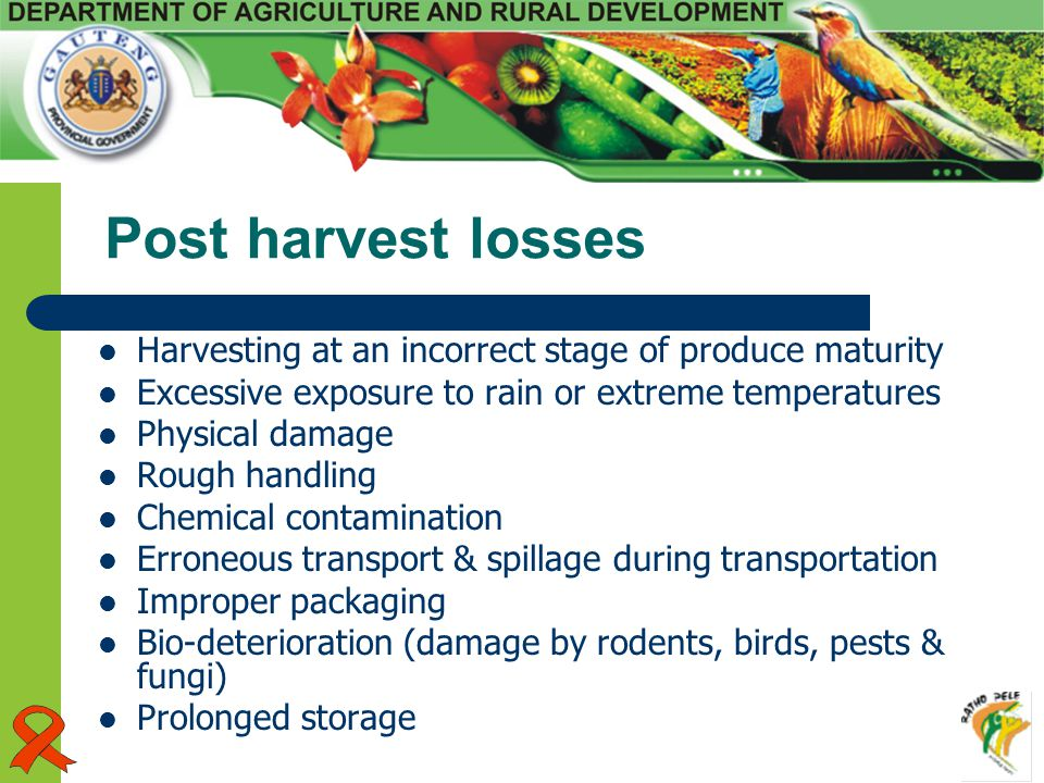 Post harvest losses Harvesting at an incorrect stage of produce maturity Excessive exposure to rain or extreme temperatures Physical damage Rough hand