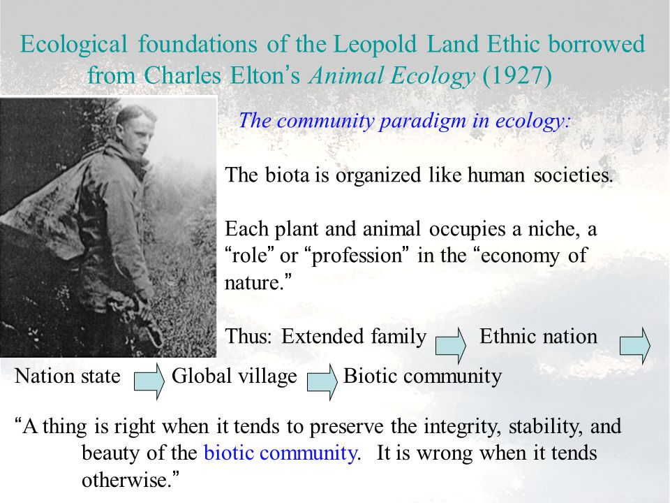 Ecological foundations of the Leopold Land Ethic borrowed from Charles Elton's Animal Ecology (1927) The community paradigm in ecology: The biota is o