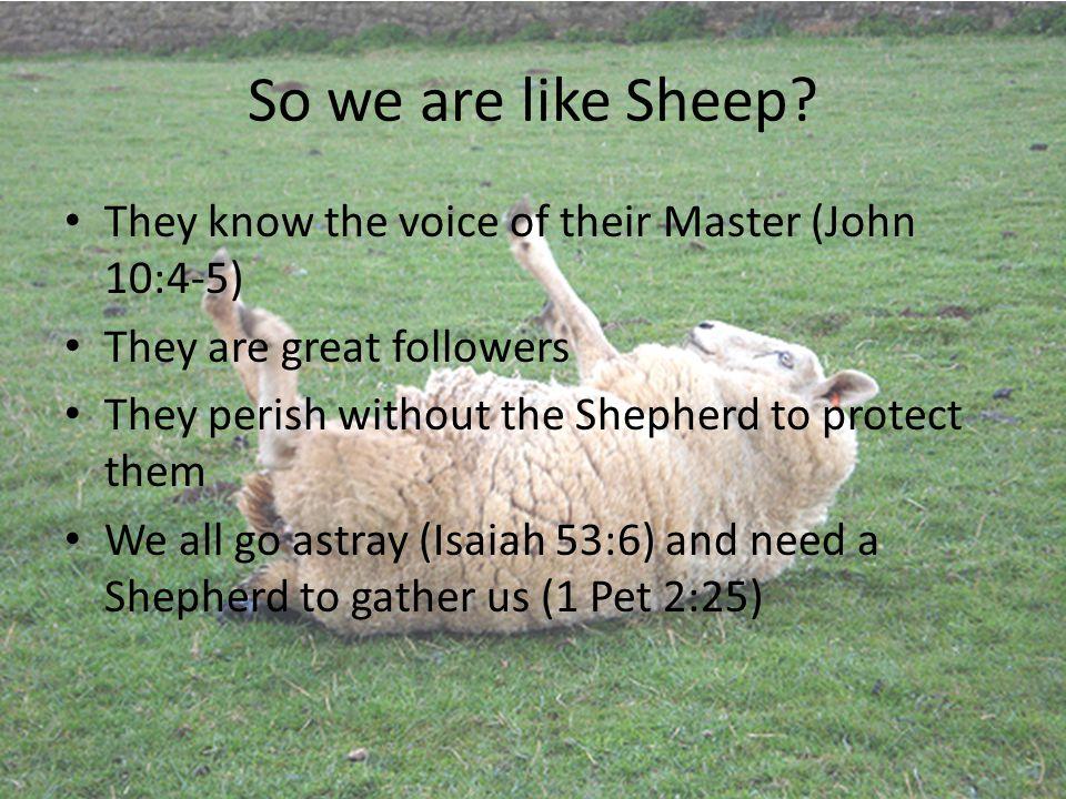 So we are like Sheep.