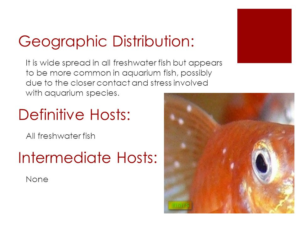 Geographic Distribution: It is wide spread in all freshwater fish but appears to be more common in aquarium fish, possibly due to the closer contact and stress involved with aquarium species.
