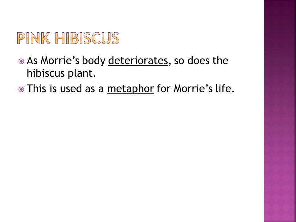  As Morrie's body deteriorates, so does the hibiscus plant.  This is used as a metaphor for Morrie's life.