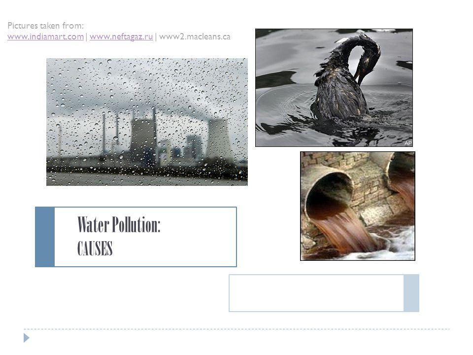 Endangering Plant & Animal Species  Oil Spills I.