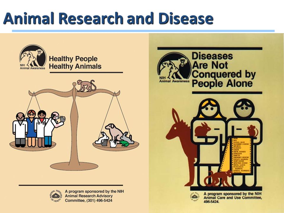14 Animal Research and Disease