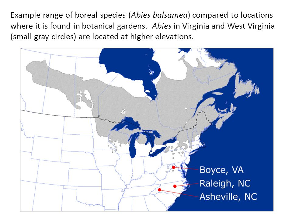 Example range of boreal species (Abies balsamea) compared to locations where it is found in botanical gardens. Abies in Virginia and West Virginia (sm