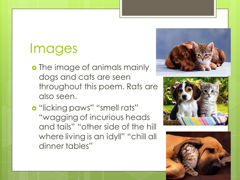 Images  The image of animals mainly dogs and cats are seen throughout this poem.
