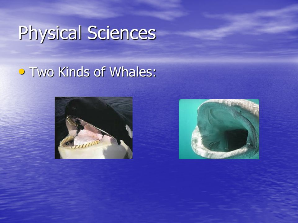 Physical Sciences Two Kinds of Whales: Two Kinds of Whales: