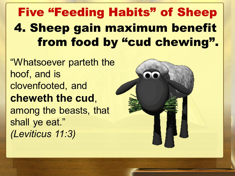 Five Feeding Habits of Sheep 4. Sheep gain maximum benefit from food by cud chewing .