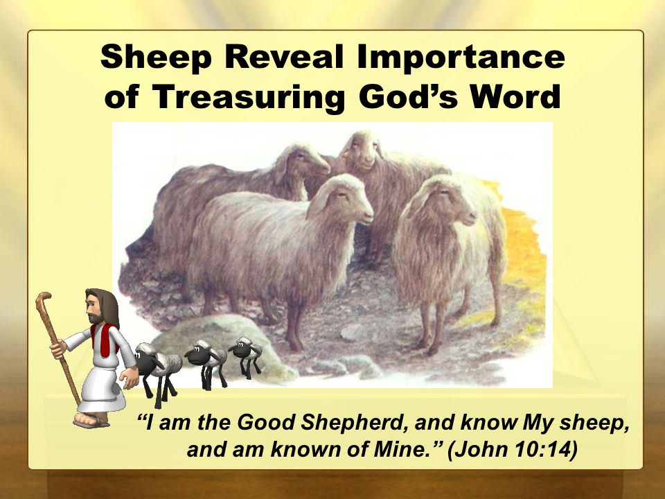 Sheep Reveal Importance of Treasuring God's Word I am the Good Shepherd, and know My sheep, and am known of Mine. (John 10:14)