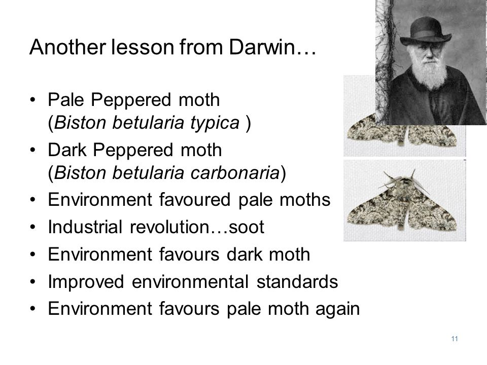 11 Another lesson from Darwin… Pale Peppered moth (Biston betularia typica ) Dark Peppered moth (Biston betularia carbonaria) Environment favoured pale moths Industrial revolution…soot Environment favours dark moth Improved environmental standards Environment favours pale moth again