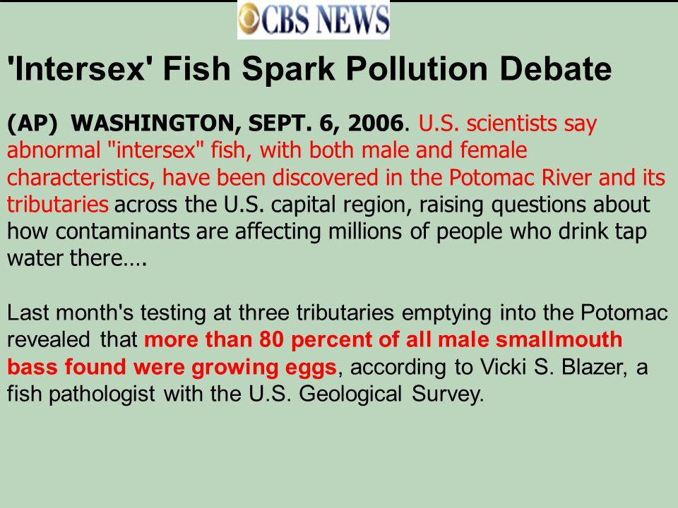 'Intersex' Fish Spark Pollution Debate (AP) WASHINGTON, SEPT. 6, 2006. U.S. scientists say abnormal
