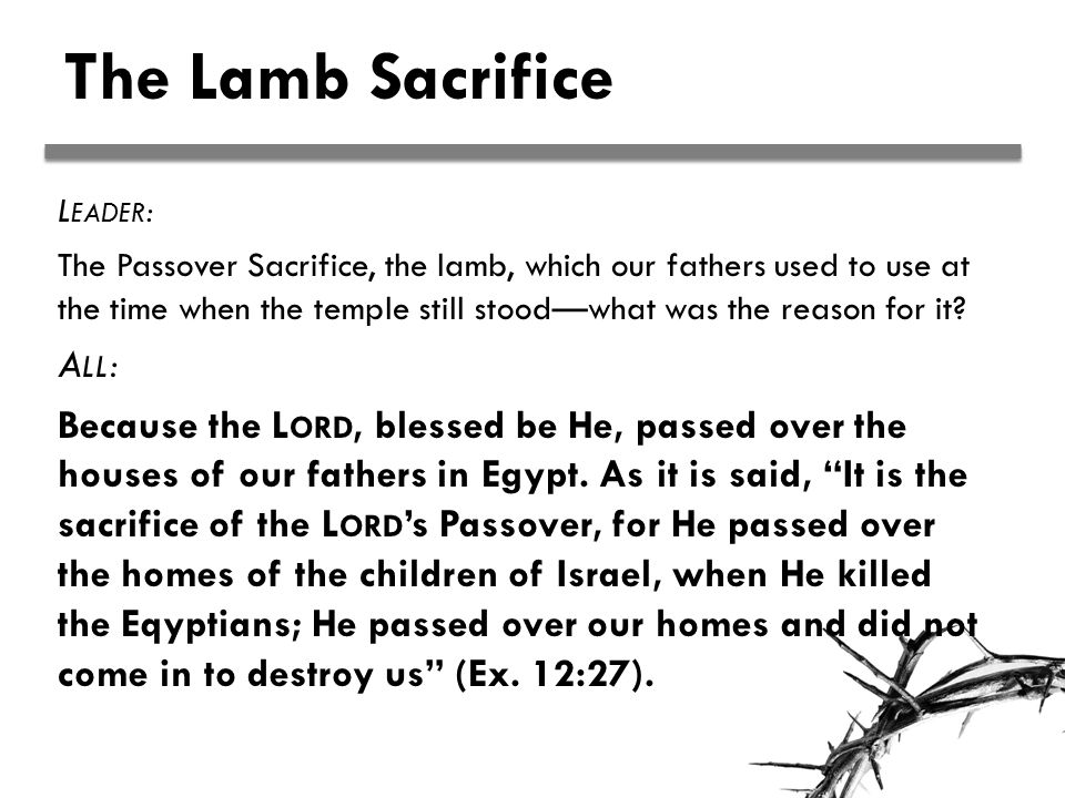 The Lamb Sacrifice L EADER : The Passover Sacrifice, the lamb, which our fathers used to use at the time when the temple still stood—what was the reason for it.