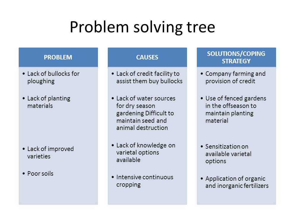 Problem solving tree con'd PROBLEM (Trunk) Drought Insect damage to root and vines Animal destruction Lack of knowledge on modern methods of production CAUSES (Roots Natural, they cannot explain organic material in soil, Clay soils attract them Animals are not restricted /housed intensively Lack of training SOLUTIONS/COPING STRATEGY (Crown) Planting early if seed is available Clear all crop residue from field and crop on loamy soils, use of pesticides Fencing of potato fields and tethering of animals They need training on new agronomic practices