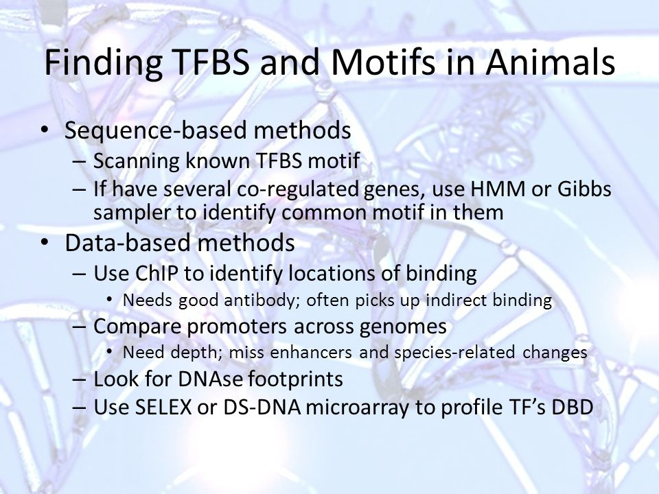 Finding TFBS and Motifs in Animals Sequence-based methods – Scanning known TFBS motif – If have several co-regulated genes, use HMM or Gibbs sampler to identify common motif in them Data-based methods – Use ChIP to identify locations of binding Needs good antibody; often picks up indirect binding – Compare promoters across genomes Need depth; miss enhancers and species-related changes – Look for DNAse footprints – Use SELEX or DS-DNA microarray to profile TF's DBD
