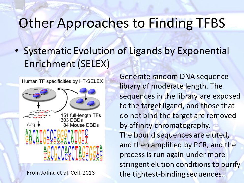 Other Approaches to Finding TFBS Systematic Evolution of Ligands by Exponential Enrichment (SELEX) From Jolma et al, Cell, 2013 Generate random DNA sequence library of moderate length.