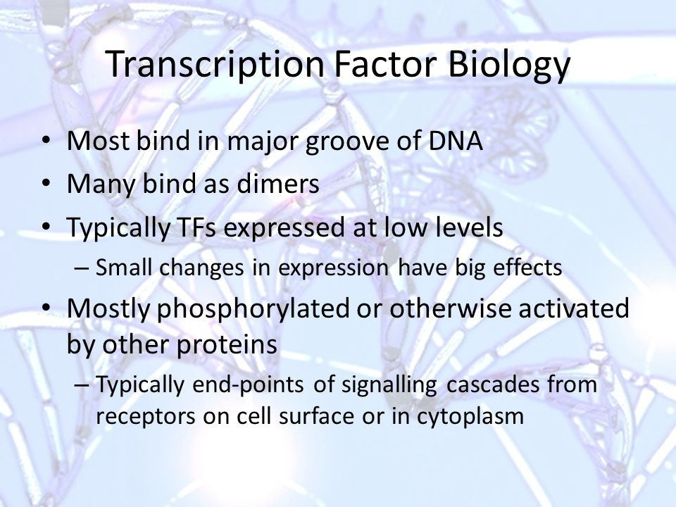Transcription Factor Biology Most bind in major groove of DNA Many bind as dimers Typically TFs expressed at low levels – Small changes in expression have big effects Mostly phosphorylated or otherwise activated by other proteins – Typically end-points of signalling cascades from receptors on cell surface or in cytoplasm
