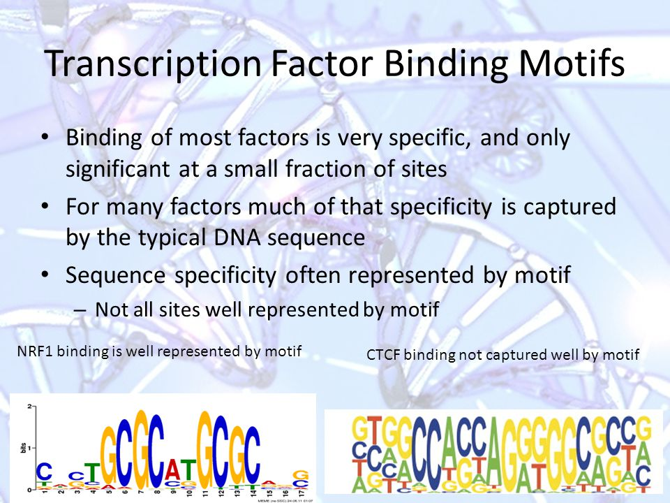 Transcription Factor Binding Sites ChIP-Seq experiments in the human genome typically find from several hundred to >20,000 locations where a particular TF is binding Binding sites may be stronger or weaker A typical set of ChIP-Seq reads for HNF4a (from BayesPeak paper)