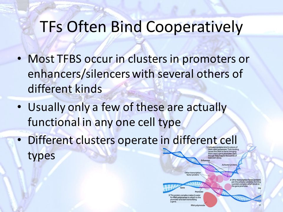 Dynamics of TF Binding TF comes on and off the DNA site, often cycling in minutes or seconds Cooperative binding stabilizes TF Many TFs act in respond to signals or stresses – Not captured systematically in most samples