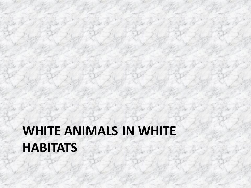 WHITE ANIMALS IN WHITE HABITATS
