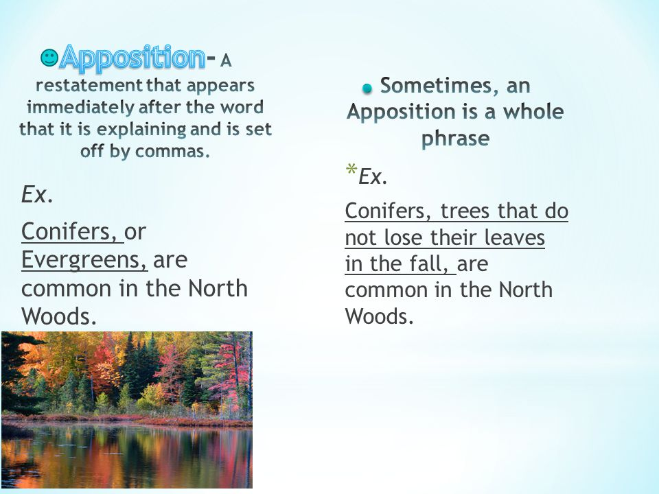 Ex. Conifers, or Evergreens, are common in the North Woods. * Ex. Conifers, trees that do not lose their leaves in the fall, are common in the North W