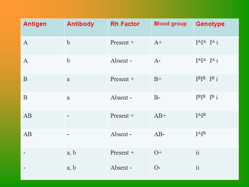 AntigenAntibodyRh Factor Blood group Genotype AbPresent +A+I A I A I A i AbAbsent -A-I A I A I A i BaPresent +B+I B I B I B i BaAbsent -B-I B I B I B