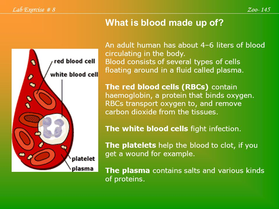What is blood made up of? An adult human has about 4–6 liters of blood circulating in the body. Blood consists of several types of cells floating arou