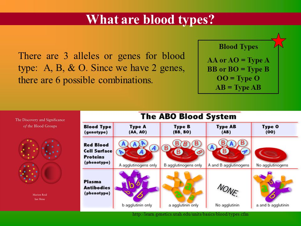 What are blood types? http://learn.genetics.utah.edu/units/basics/blood/types.cfm There are 3 alleles or genes for blood type: A, B, & O. Since we hav