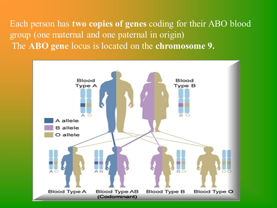 Each person has two copies of genes coding for their ABO blood group (one maternal and one paternal in origin) The ABO gene locus is located on the ch