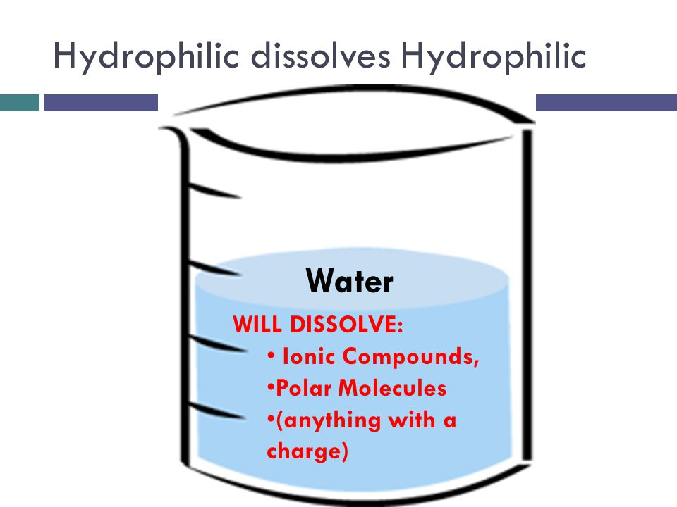 Hydrophilic dissolves Hydrophilic WILL DISSOLVE: Ionic Compounds, Polar Molecules (anything with a charge) Water