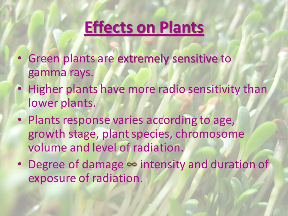 Effects on Plants extremely sensitive Green plants are extremely sensitive to gamma rays.