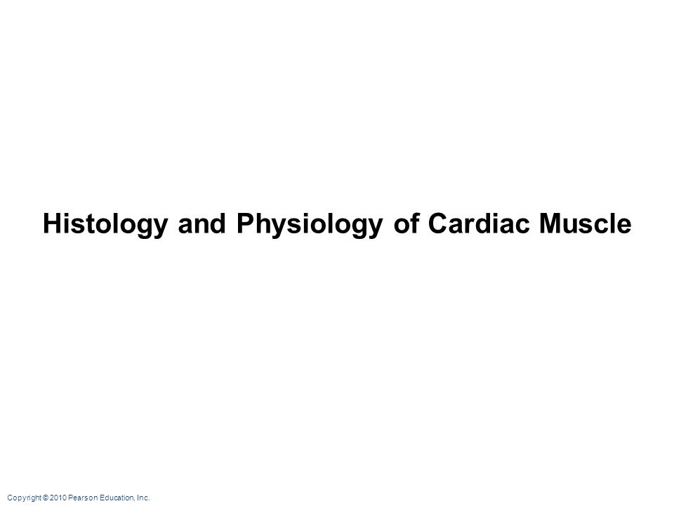 Copyright © 2010 Pearson Education, Inc. Histology and Physiology of Cardiac Muscle