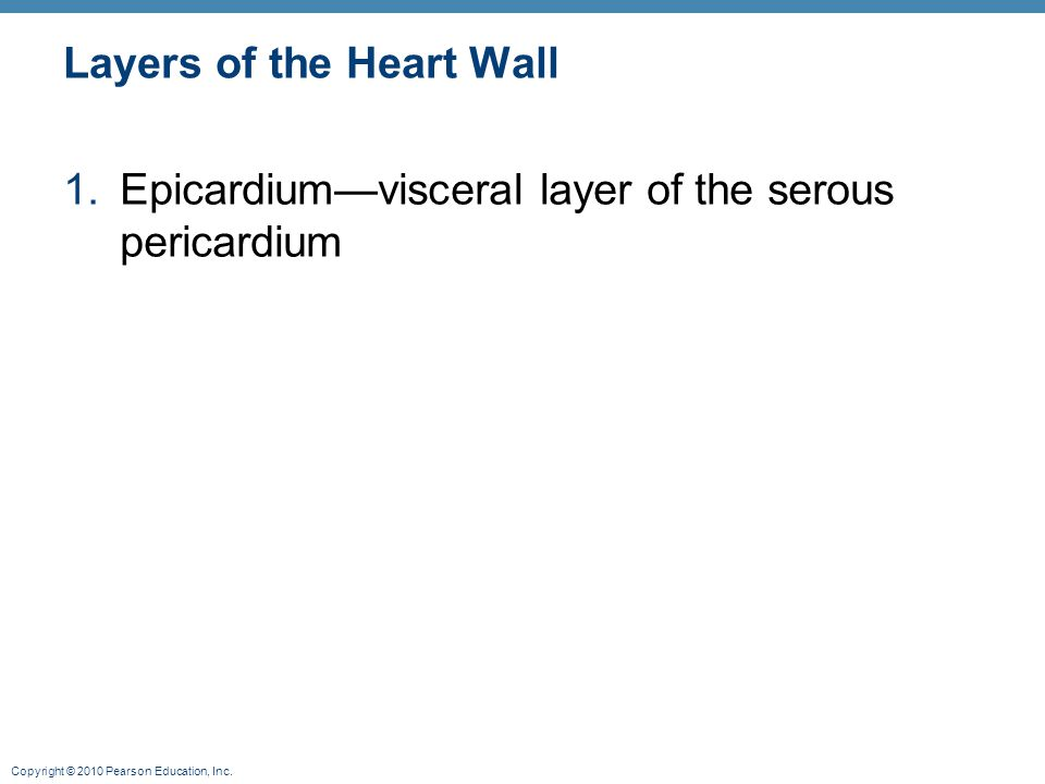 Copyright © 2010 Pearson Education, Inc. Layers of the Heart Wall 1.Epicardium—visceral layer of the serous pericardium