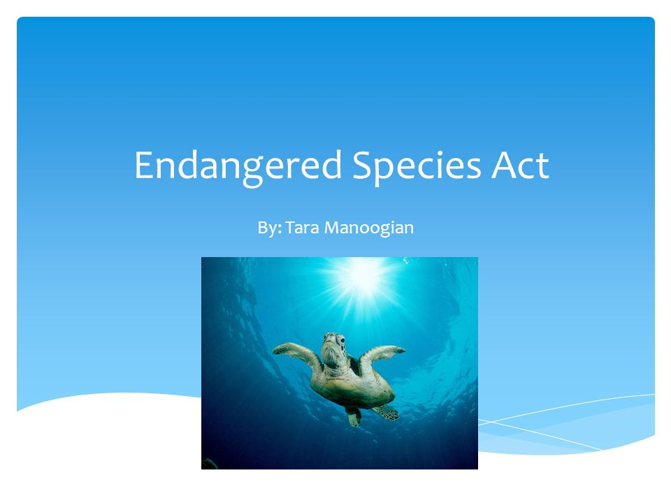 Endangered Species Act By: Tara Manoogian