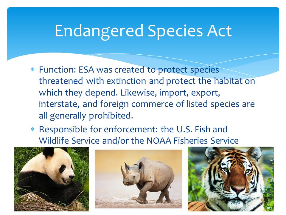  Function: ESA was created to protect species threatened with extinction and protect the habitat on which they depend.