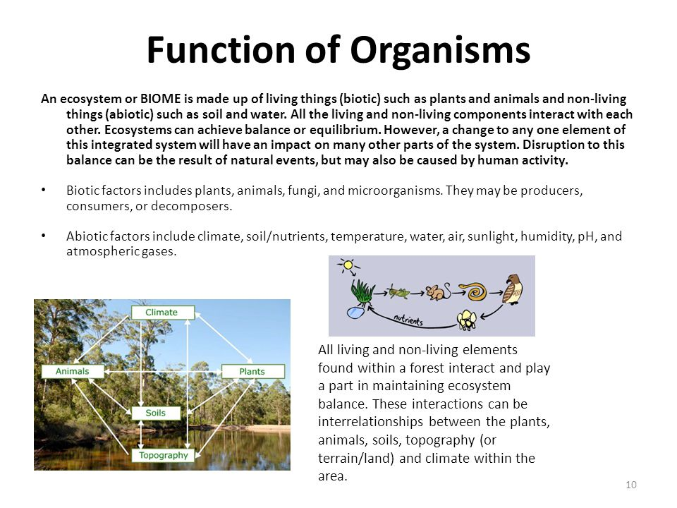 Function of Organisms An ecosystem or BIOME is made up of living things (biotic) such as plants and animals and non-living things (abiotic) such as soil and water.